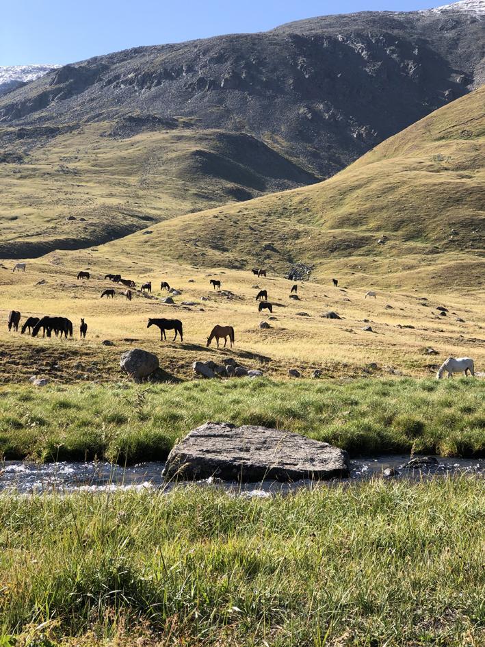 Metshobused Kasahstanis