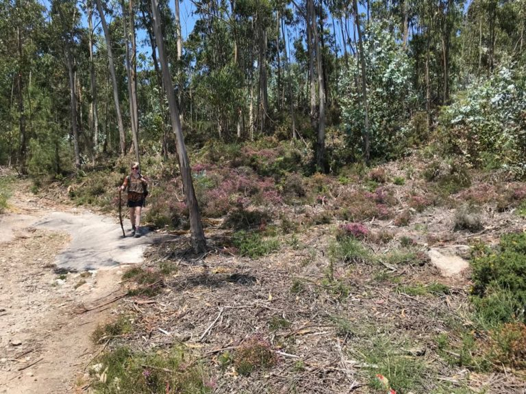 Portugese. Merino wool TUUB is good for hiking6 (1)
