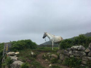 day2 Povoa de Varzim to Marinhas. Atlantic Ocean. Travel light Camino Portuguese Costal (1)